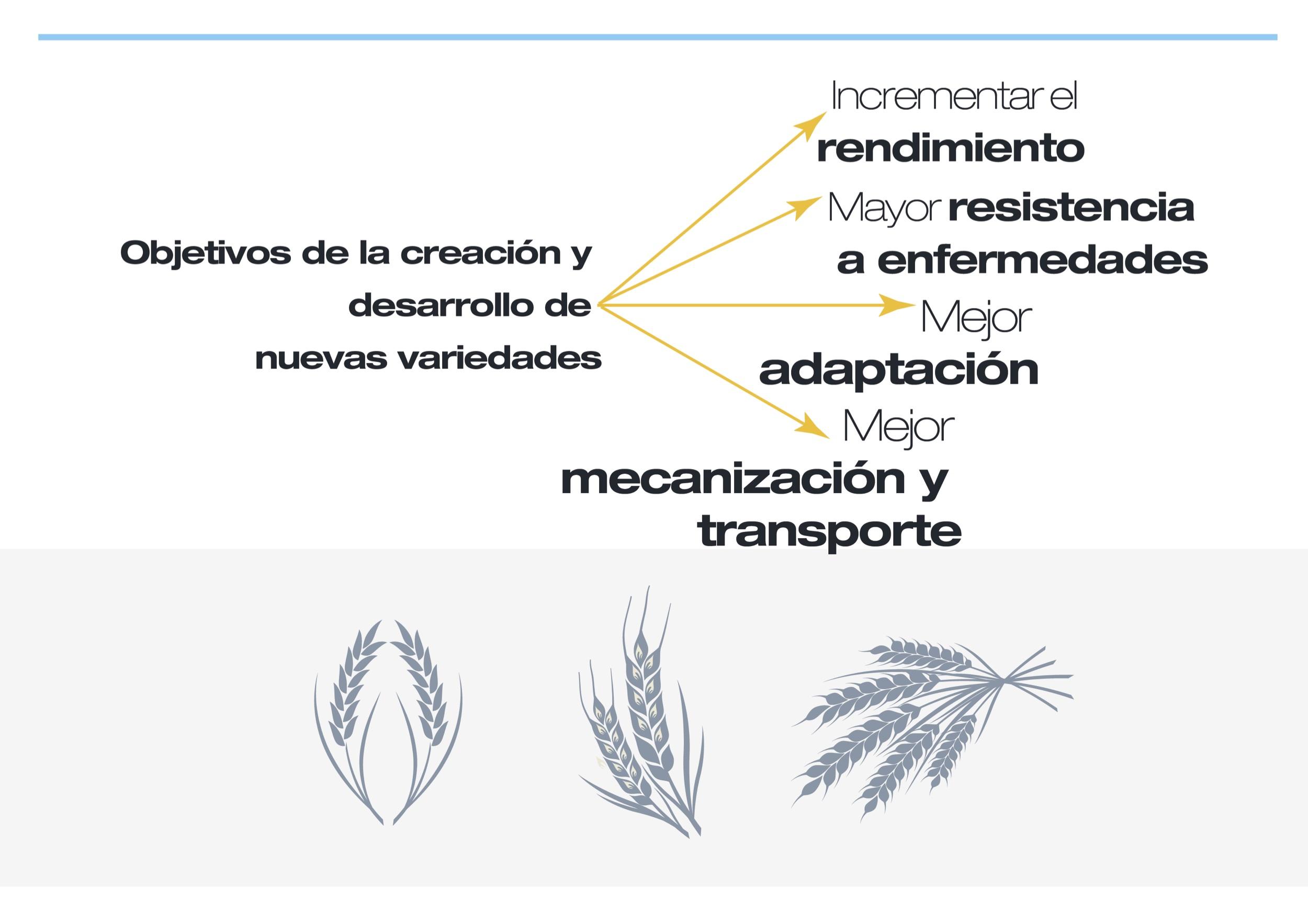objetivos de la creacion nuevas variedades